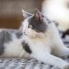 глаза_кота