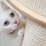 белая_кошка