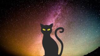 кошка_молока